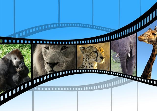 film a zvířata