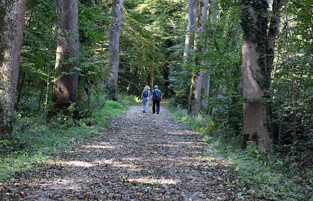 na lesní cestě