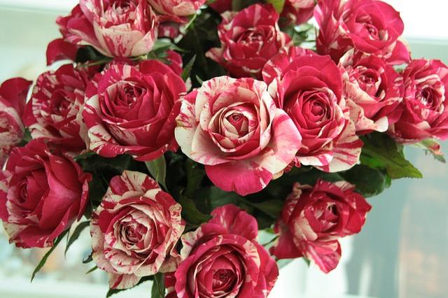žíhané růže